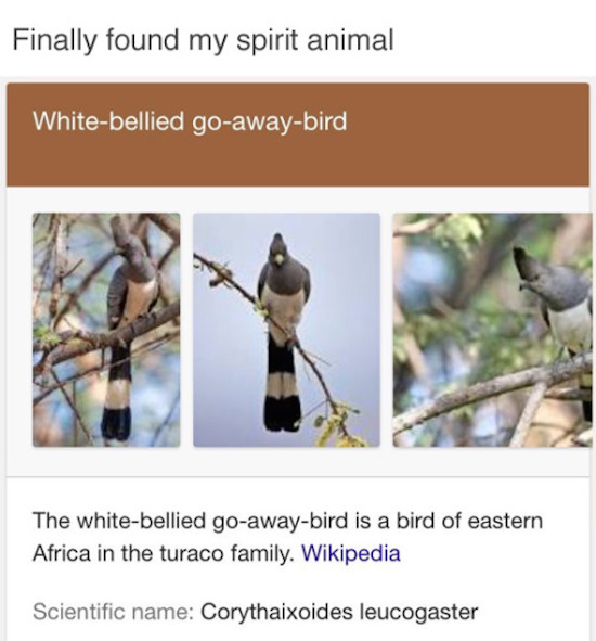 funny image of go-away bird is my spirit animal