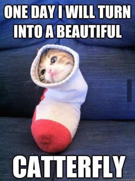 funny image of cat in sock catterfly
