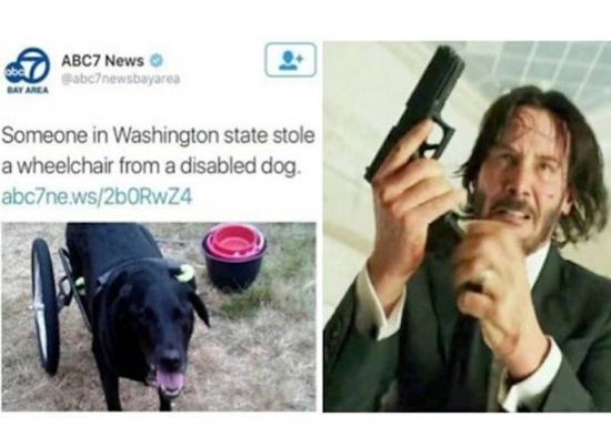 funny image of john wick avenging dog in wheelchair