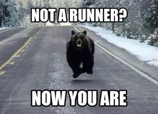 hilarious picture of not a runner bear