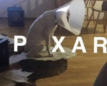 hilarious picture of dog dressed like pixar lamp