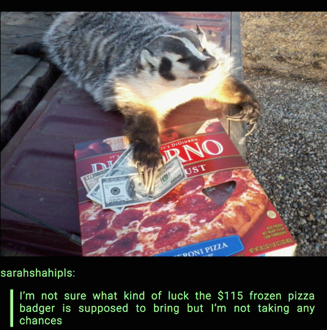 hilarious picture of badger with frozen pizza and money