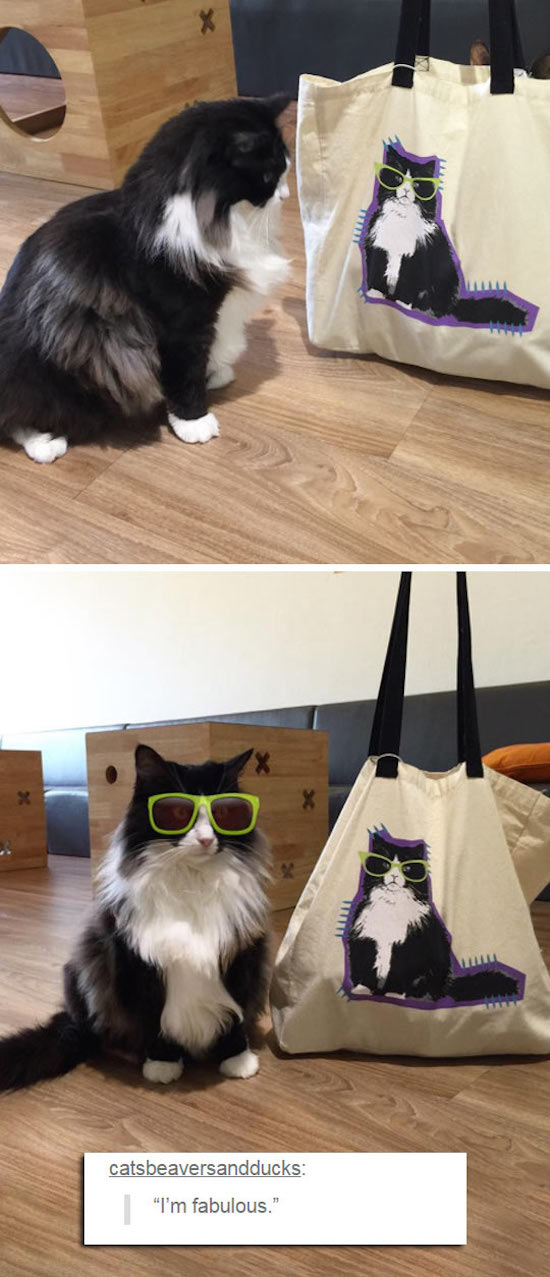 goofy and funny picture of cat in sunglasses looks like cat on bag
