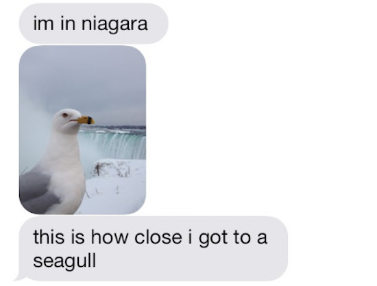 goofy and funny picture of text about a close seagull