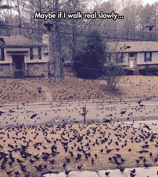 goofy and funny picture of creepy birds outside