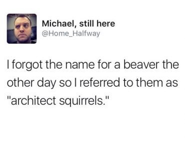 hilarious tweet about architect squirrels beavers