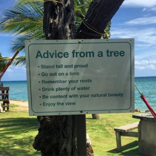 funny photo of advice from a tree sign