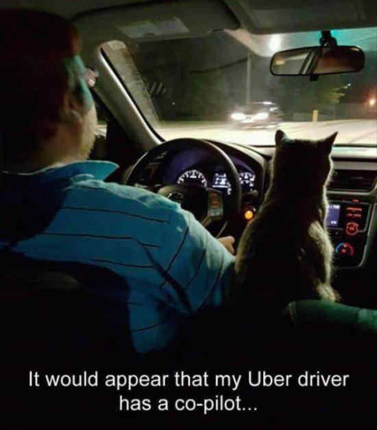 funny pic of uber driver with cat