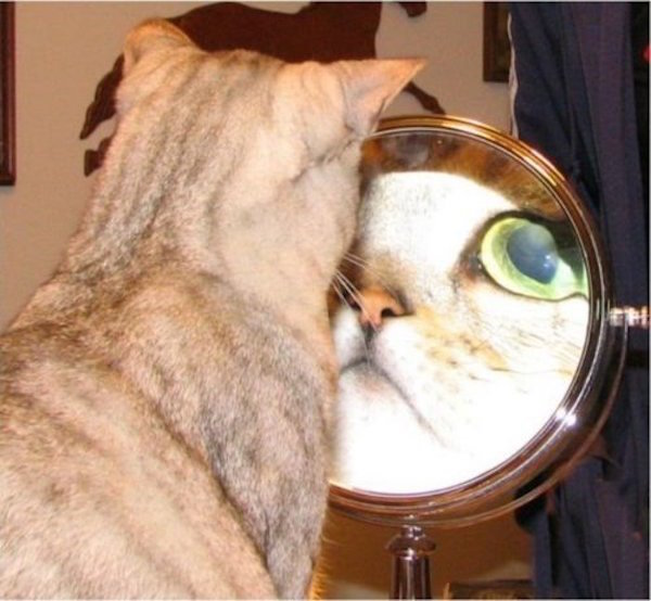 cute photo of cat looking at self in mirror