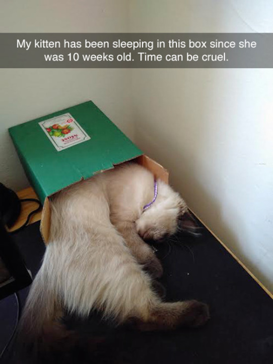 cute photo of cat doesn't fit it box anymore