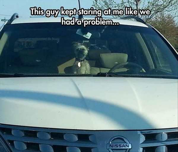 funny picture of dog in back of car staring at me