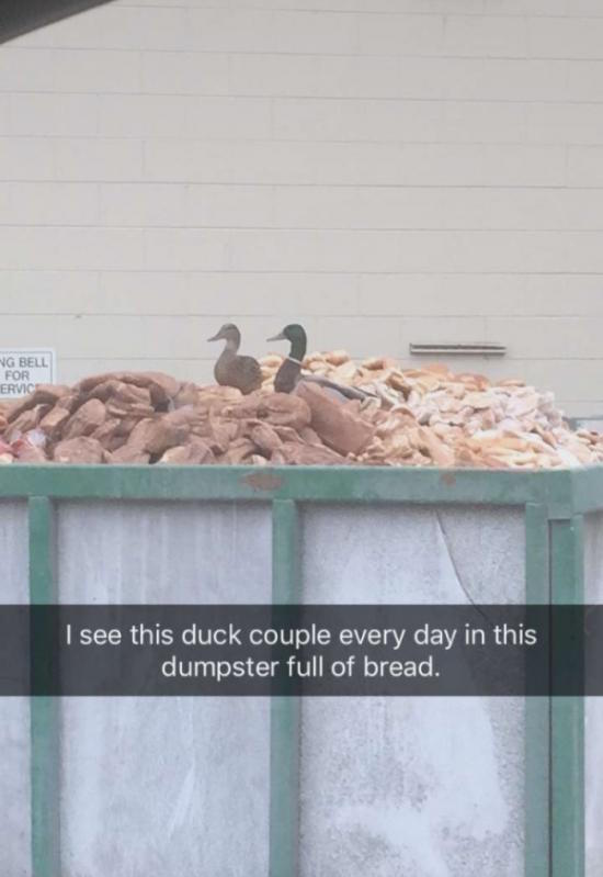funny picture of ducks in dumpster full of bread