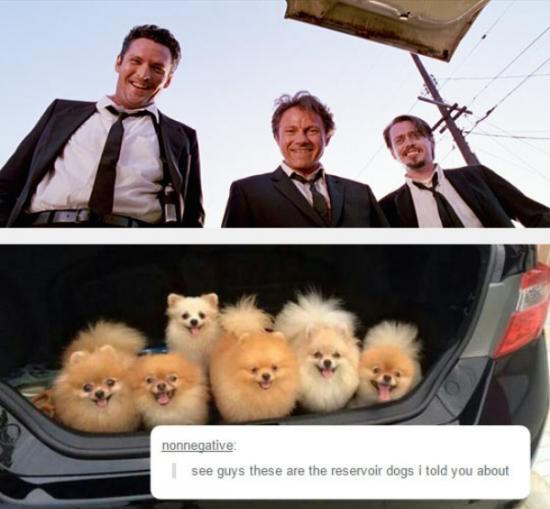 funny pic of reservoir dogs looking at actual dogs in trunk