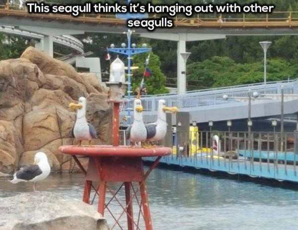 pic of seagull sitting with animatronic seagulls at disneyland