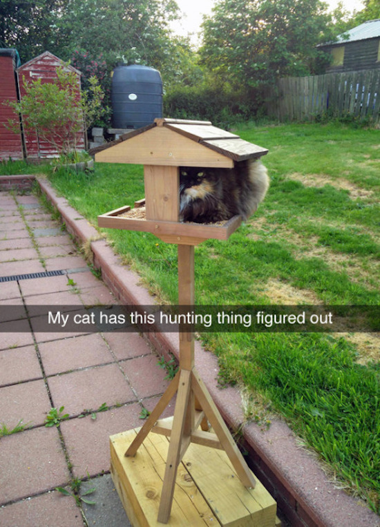 funny photo of cat in birdhouse