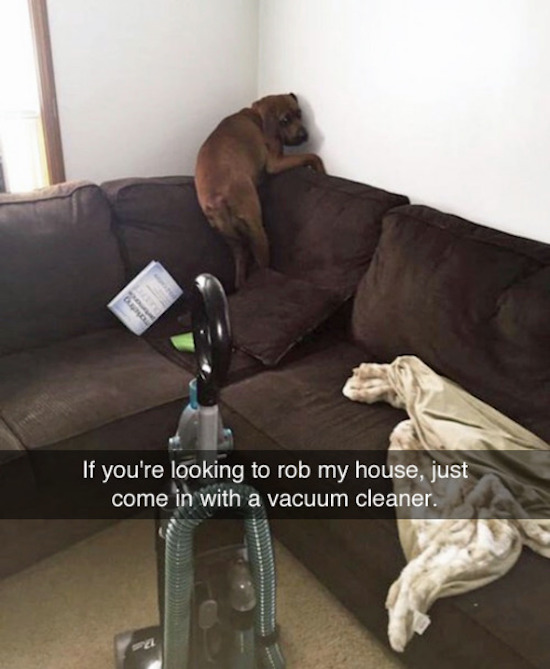 funny picture of dog afraid of vacuum cleaner