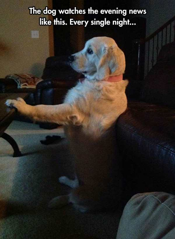 funny picture of dog watching evening news
