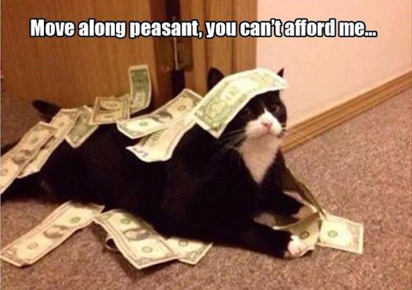 funny picture of cat covered in money