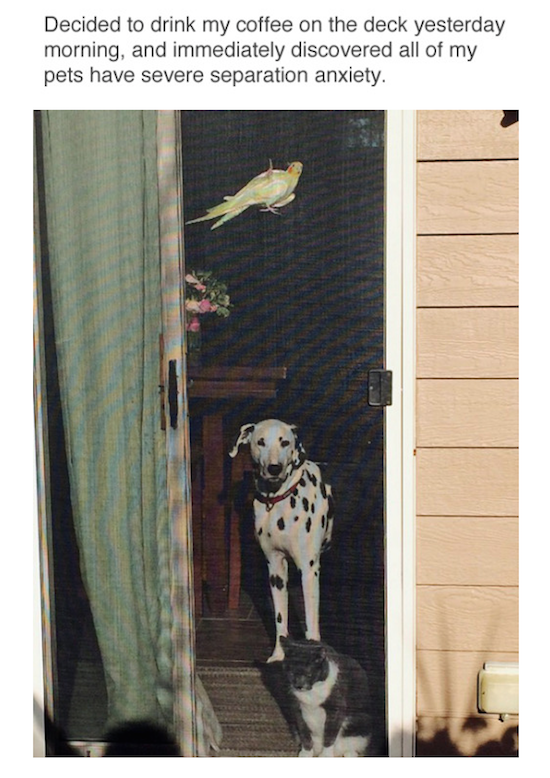 funny photo of pets waiting by screen door with separation anxiety