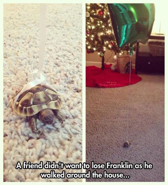 funny photo of turtle with balloon tied to it