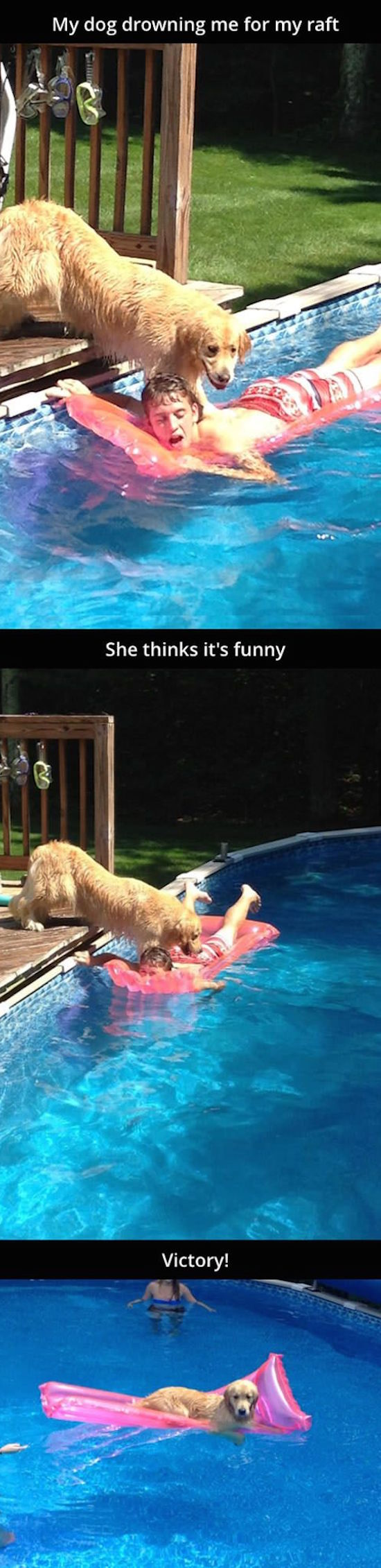 funny photo of dog knocking guy off raft in pool