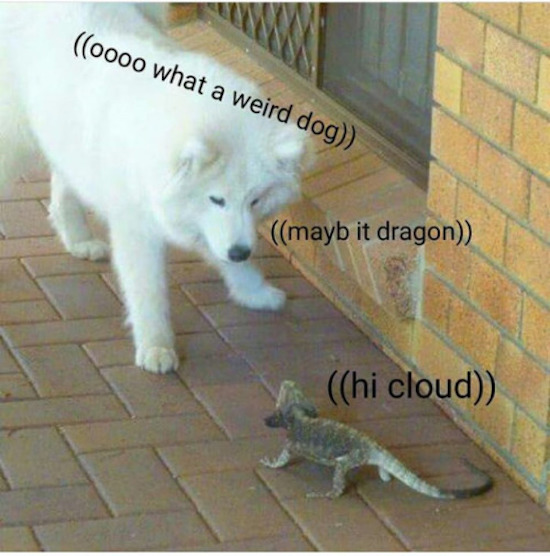 funny pic of dog and lizard talking to each other