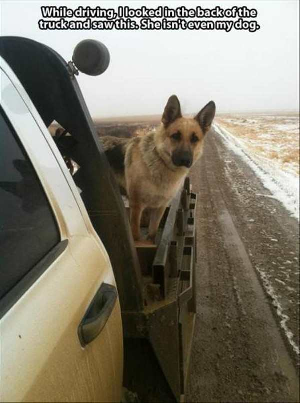 funny pic of dog hitched a ride on a truck