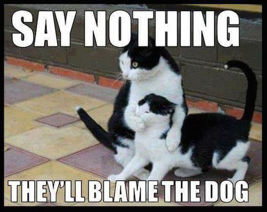 funny image of two cats say nothing they'll blame the dog