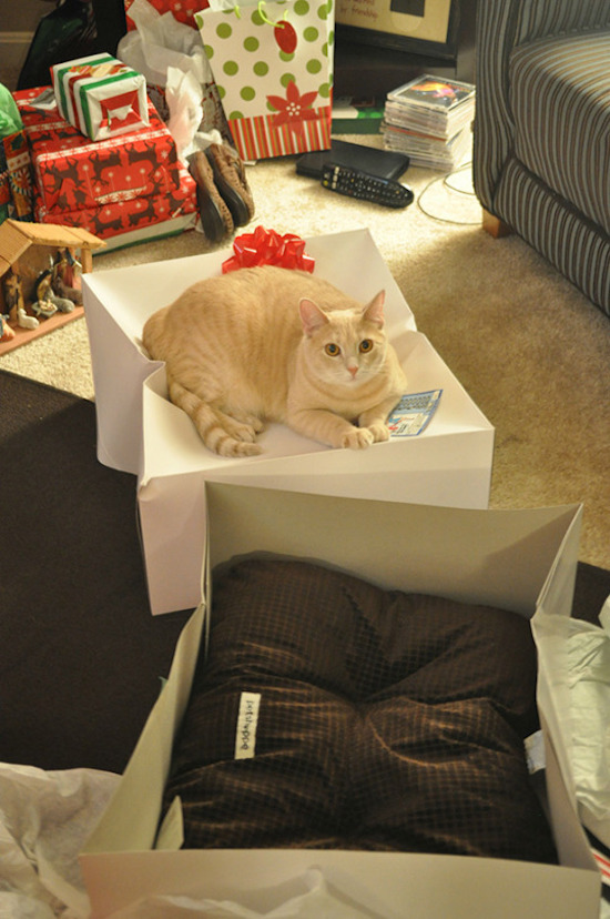 silly photo of cat sitting on box instead of pillow