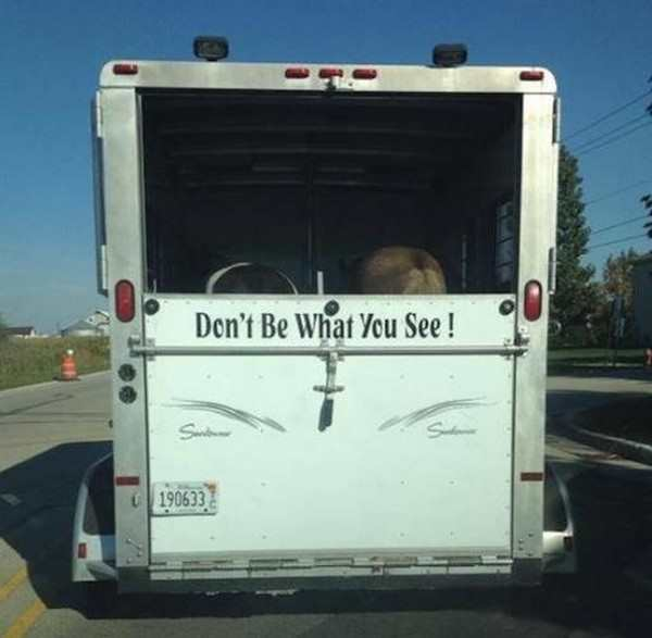 funny image of truck that says don't be what you see with horses asses