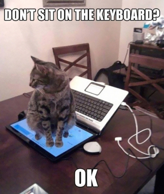 funny image of cat sitting on laptop monitor