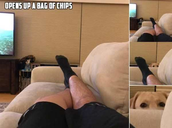 funny pic of dog peeking head over sofa when bag of chips is opened