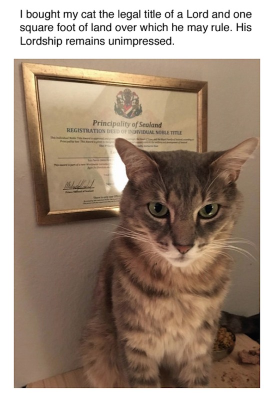 funny picture of certificate of square foot of land bought for cat
