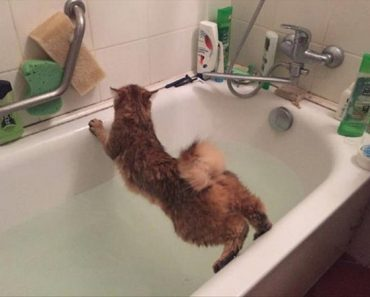 funny picture of cat avoiding water in bath