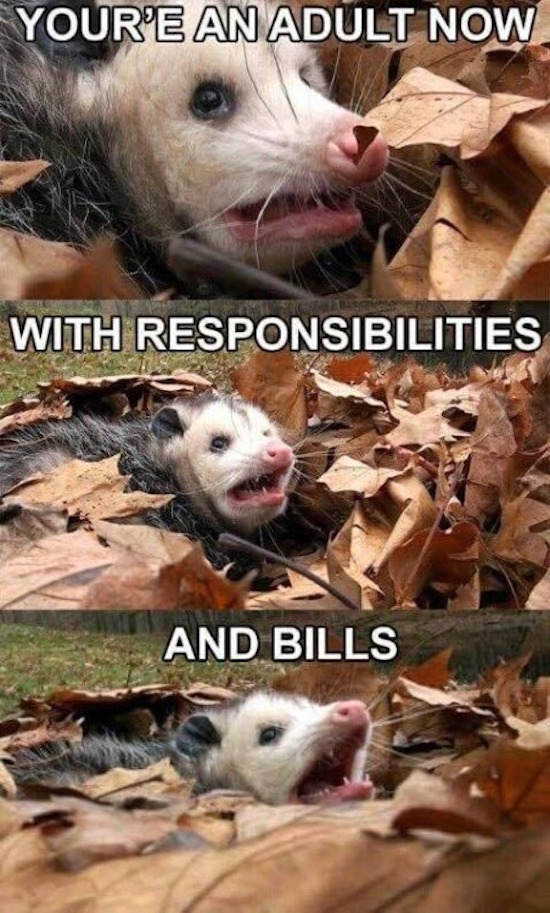 funny image of possum drowning in leaves metaphor for adult with responsibilities