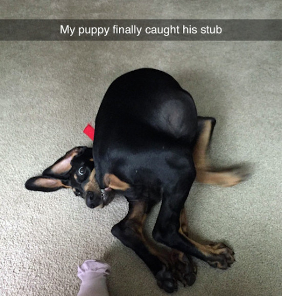funny image of dog caught its tail