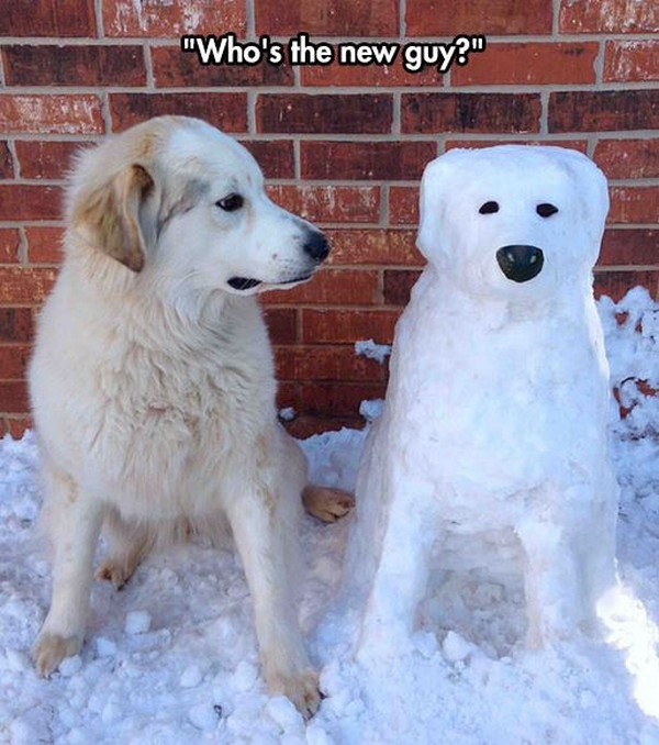 funniest pic of snow dog looks like real dog