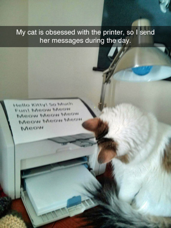 funny photo of cat is obsessed with printer