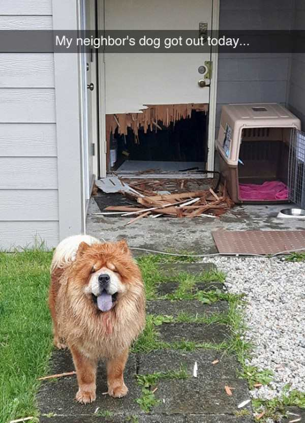 funny photo of dog broke through door out of house