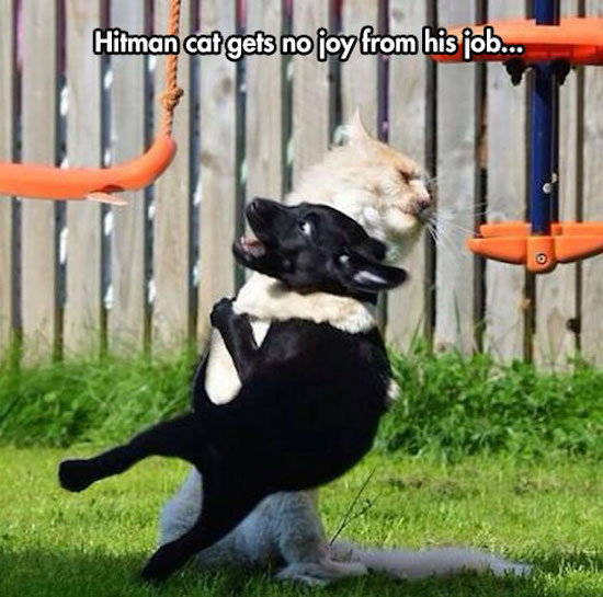 funny photo of hitman cat, cat throwing dog down