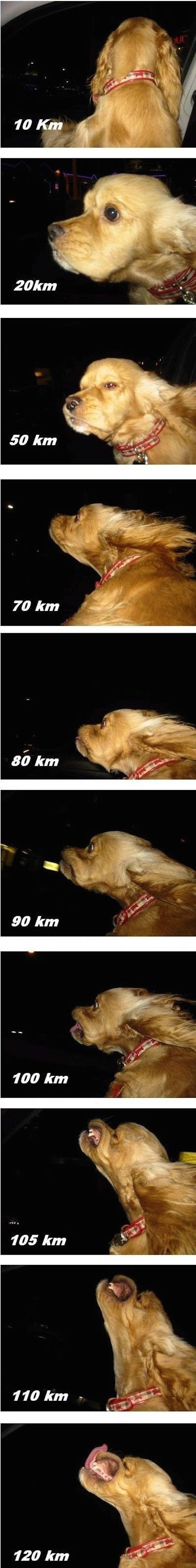 funny image of dog sticking head out car window at different speeds