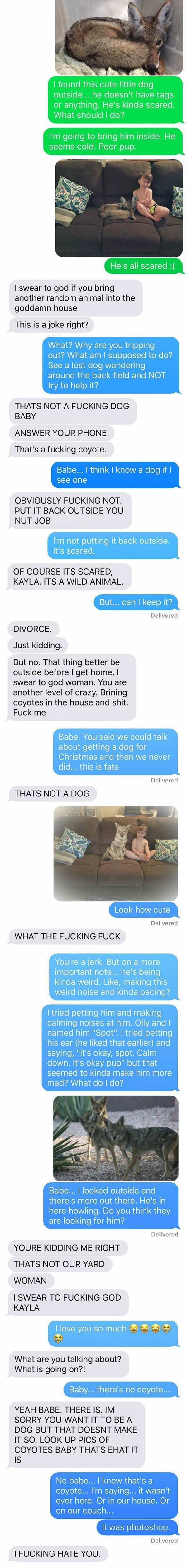 funny picture of husband texting wife about coyote with photoshop