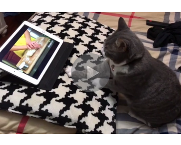 cute video of a cat learning to knead dough while watching a video tutorial