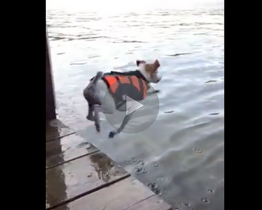 funny video of a dog falling off a pier