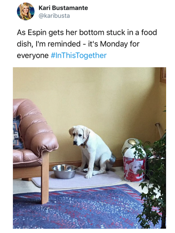 funny picture of dog with its butt stuck in the food dish