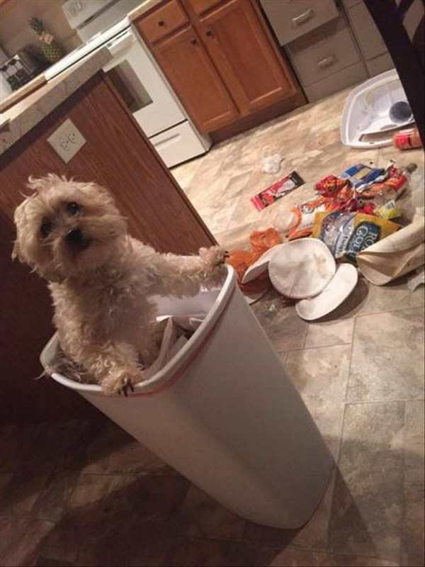 hilarious photo of dog in trash can