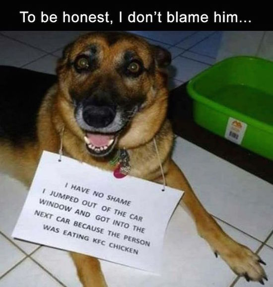hilarious photo of dog shaming sign that says it jumped into another car for kfc
