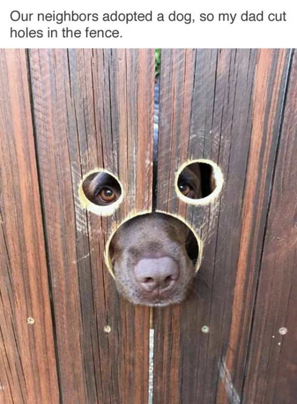 hilarious photo of dog sticking face through holes in fence