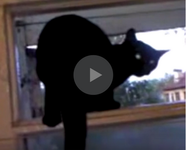 video of a cat barking like a dog until it gets caught