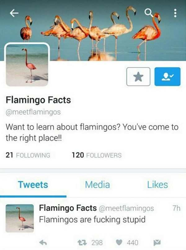 funny picture of flamingo facts twitter saying flamingos are fucking stupid